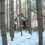 Each tree is completely processed at the stump by the harvester – felled, delimbed, and cut to length.
