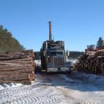 With the logs cut to length and stacked in the open, the long-haul road transport truck is loaded.